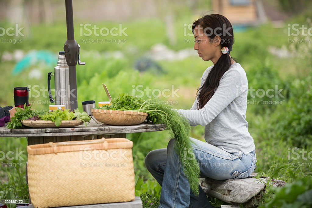 Woman using wireless technology at small business herb farm stock photo