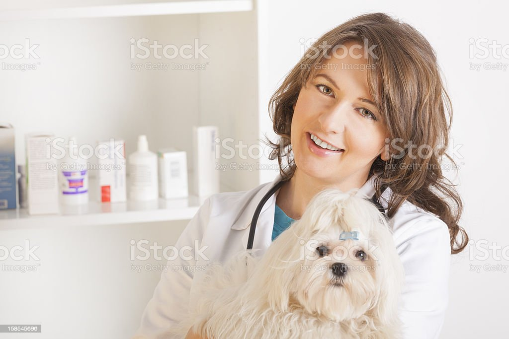 Woman vet holding a dog royalty-free stock photo