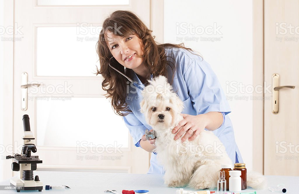 Woman vet holding a dog stock photo