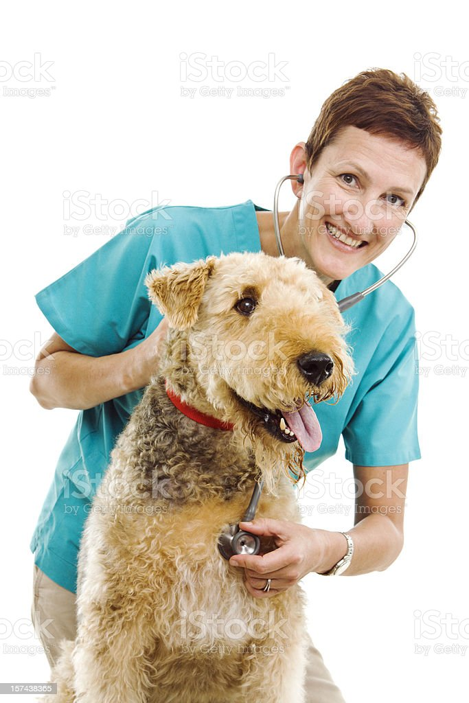 Woman Veterinarian Examining Pet Dog in Animal Clinic on White royalty-free stock photo