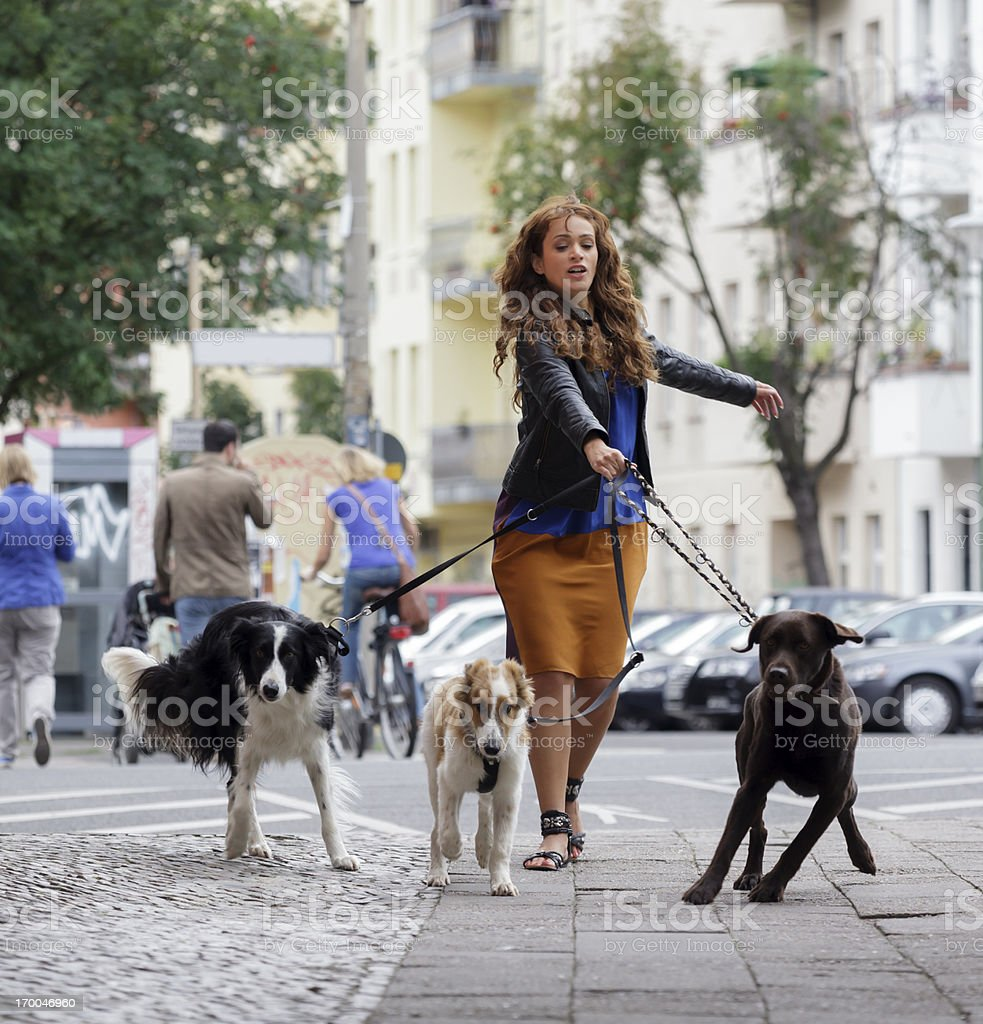 Woman Walking Dogs on a City Street stock photo