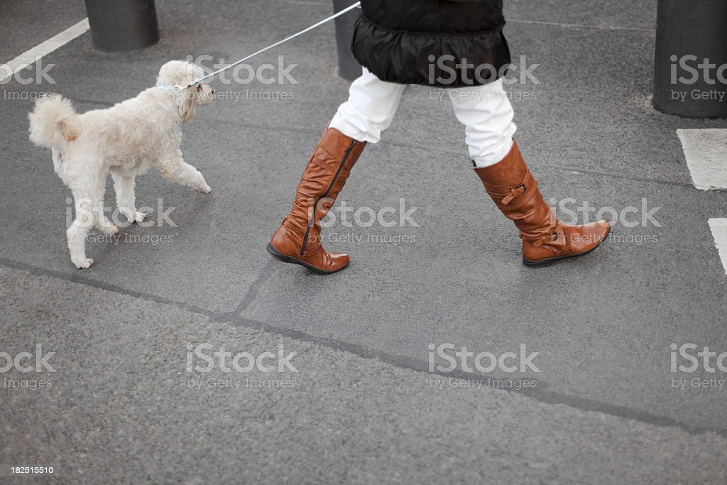 Woman walking her dog. stock photo