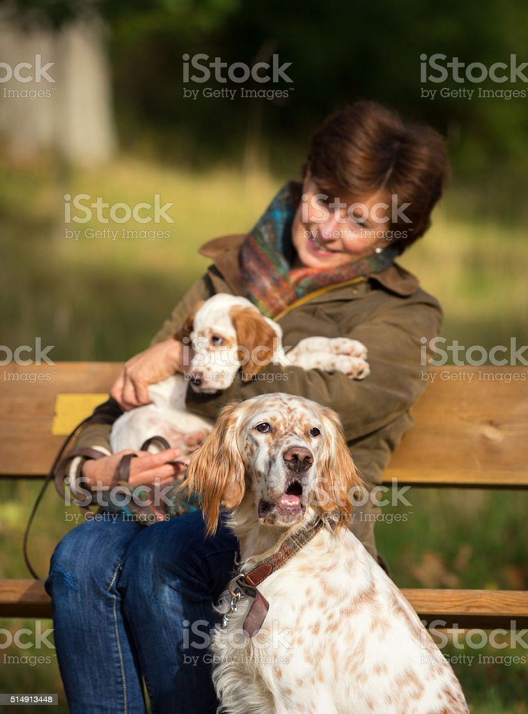 Woman walking her two Two English Setter dogs, Oslo Norway stock photo