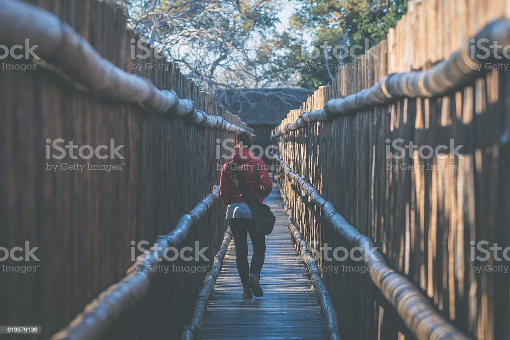 Woman walking in protective wooden walkway, South Africa stock photo