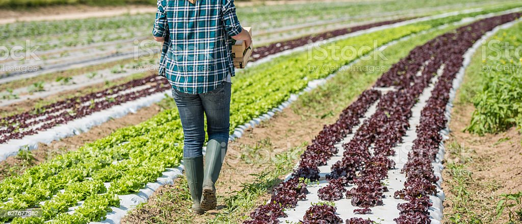 Woman walking in vegetable garden stock photo