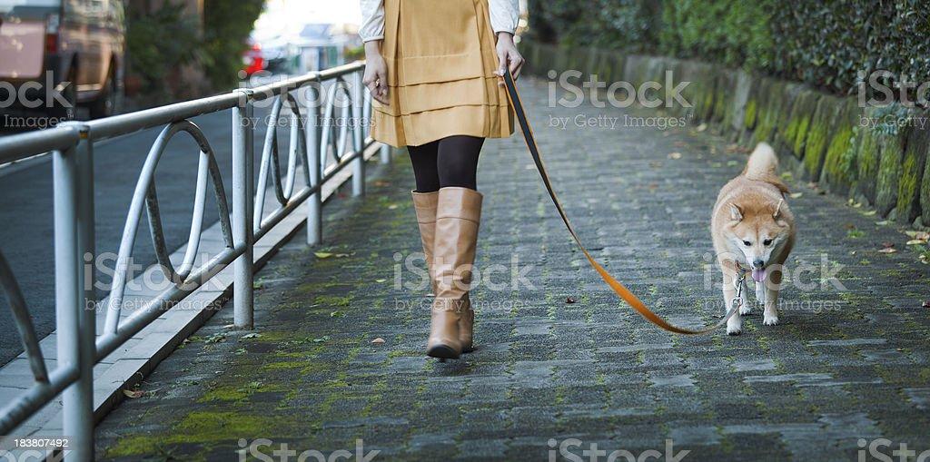 Woman Walking Leashed Shibu Inu Dog on Tranquil Cobblestone Path stock photo