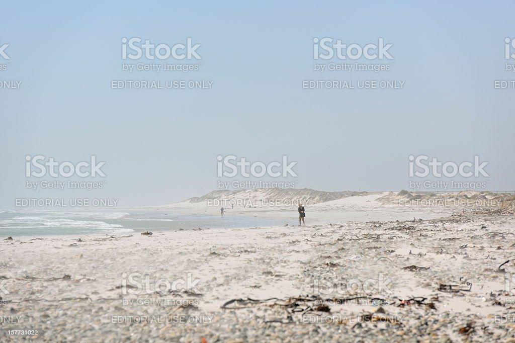 Woman Walking on Big Bay Beach Cape Town stock photo