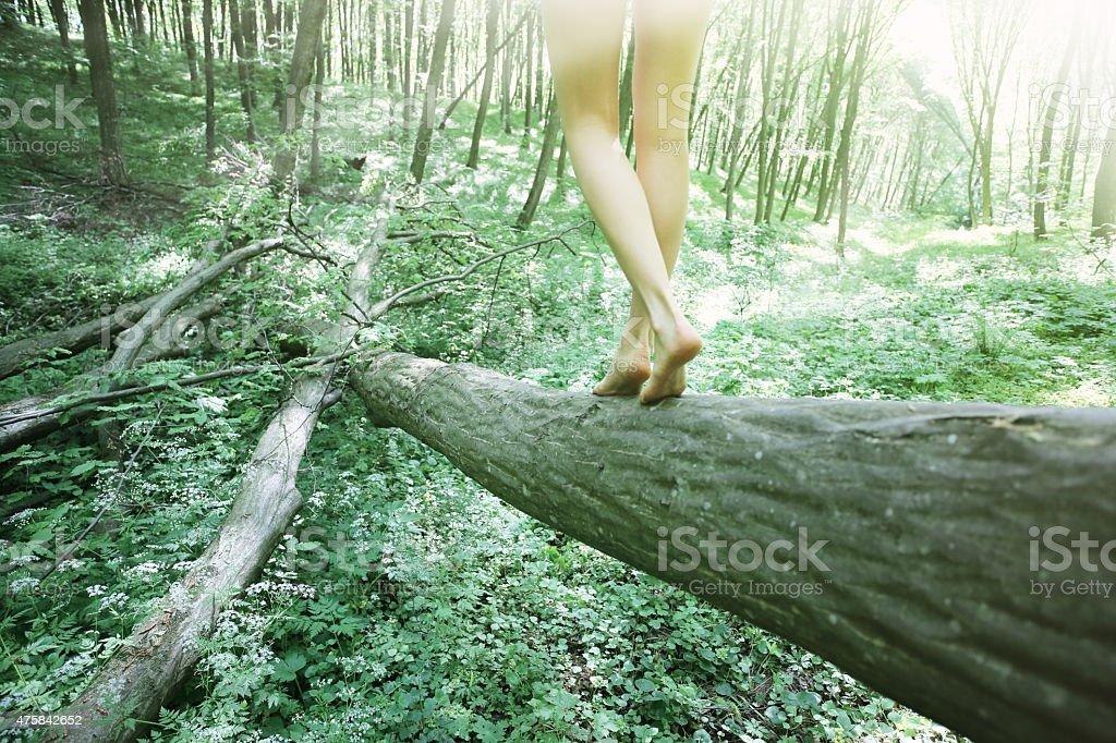 Woman walking on log in beech forest stock photo