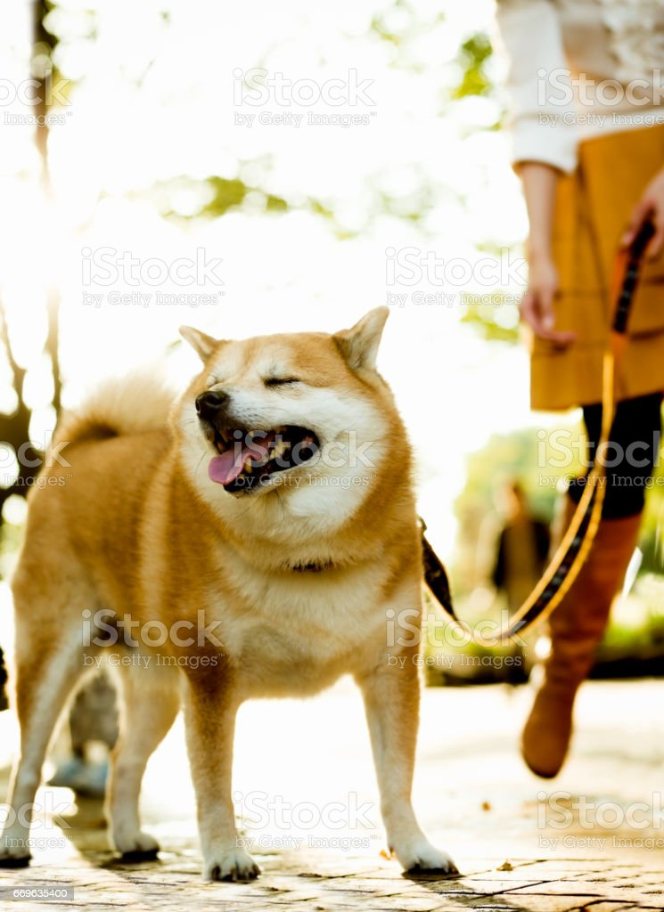 Woman Walking with a Dog stock photo
