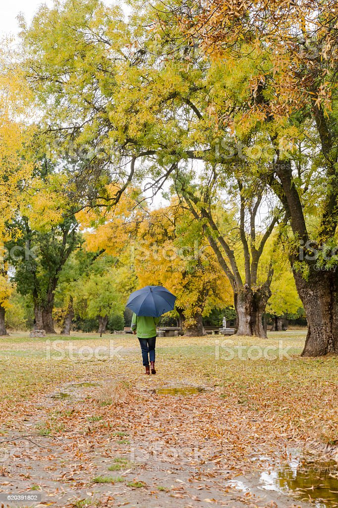 Woman walking with an umbrella with yellow leaves falling stock photo