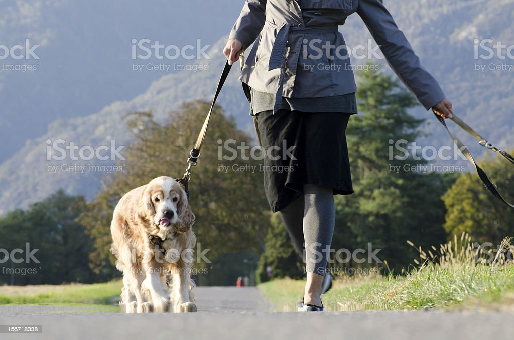Woman walking with her dogs royalty-free stock photo
