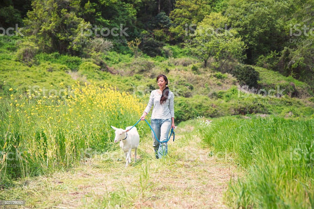 Woman walking with her pet goat in a field stock photo