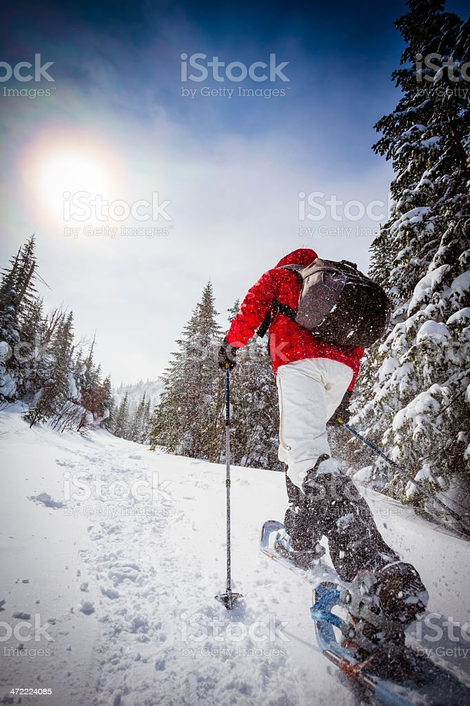 Woman Walking with Snowshoes in Winter Forest Landscape stock photo