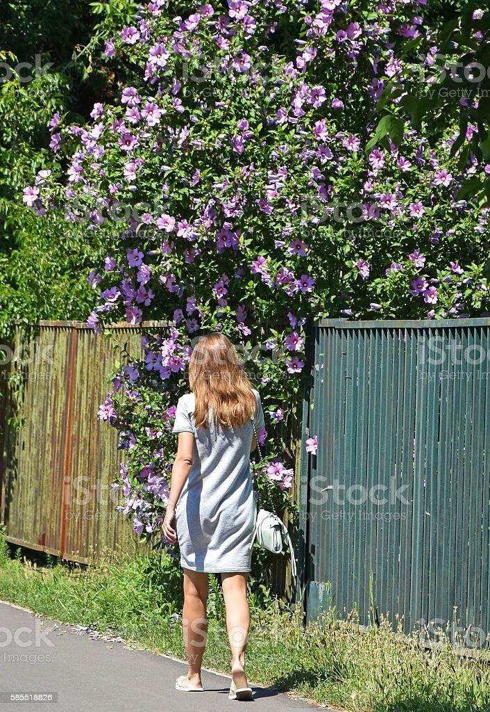 Woman walks next to a mallow bush stock photo
