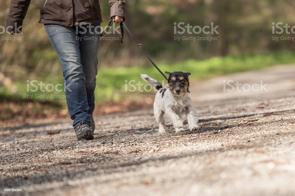 woman walks with a dog on a leash stock photo