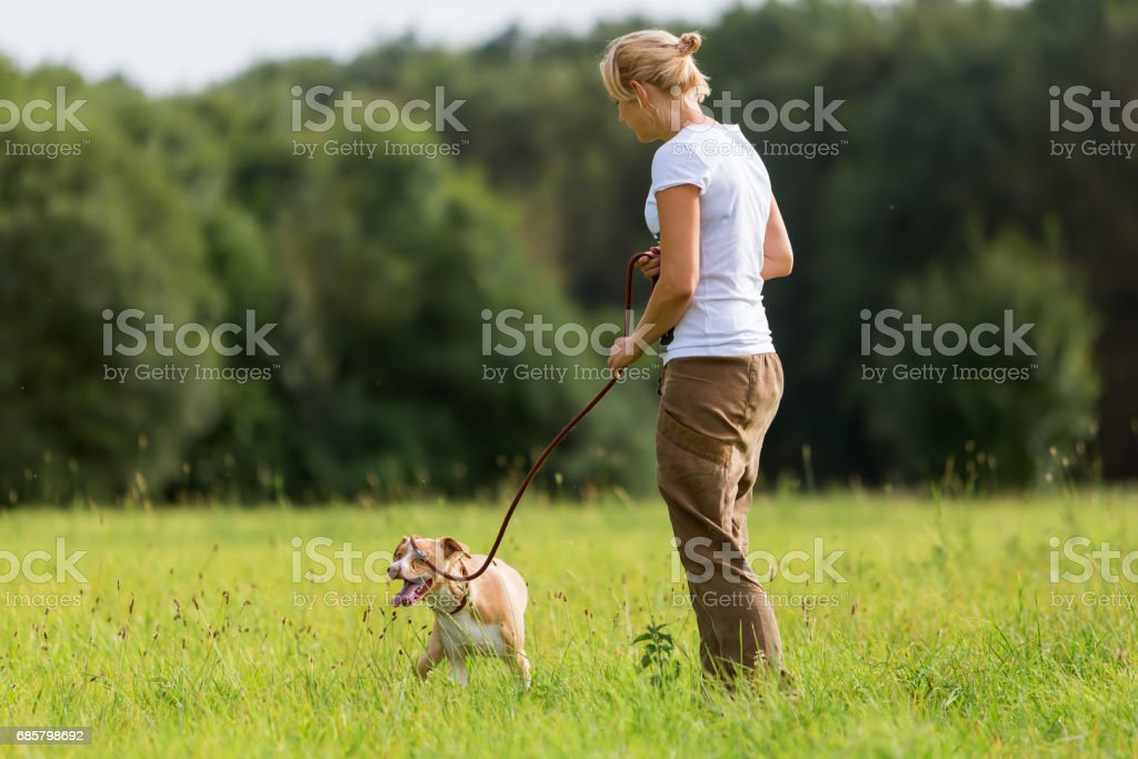 woman walks with her dog at the leash stock photo