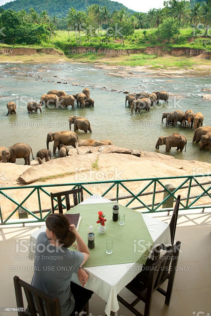 Woman watches elephants bathe from a cafe stock photo