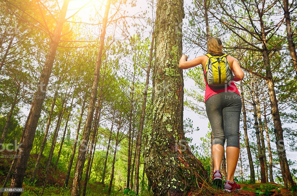 Woman watching pine forest. Focus on traveller stock photo