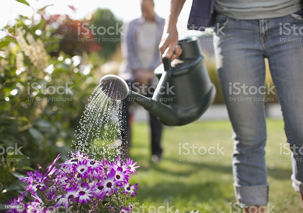 Woman watering flowers in garden with watering can stock photo
