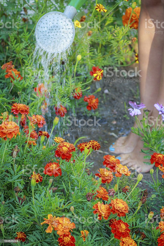 Woman watering flowers in the garden royalty-free stock photo