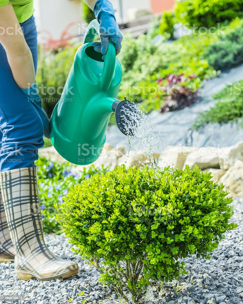 Woman watering plants in the garden with watering can royalty-free stock photo