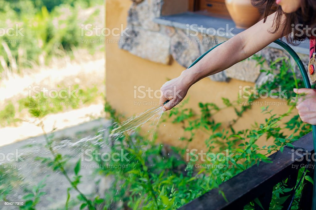 Woman watering the plants. Selective focus foto royalty-free