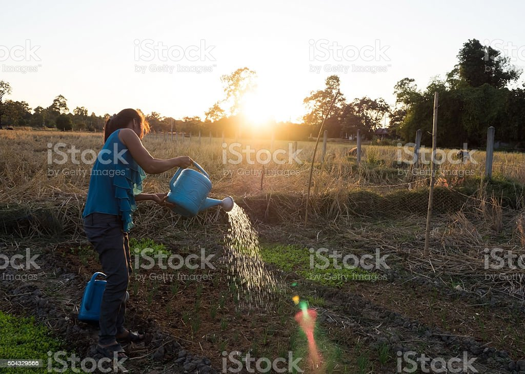 woman watering with pot stock photo
