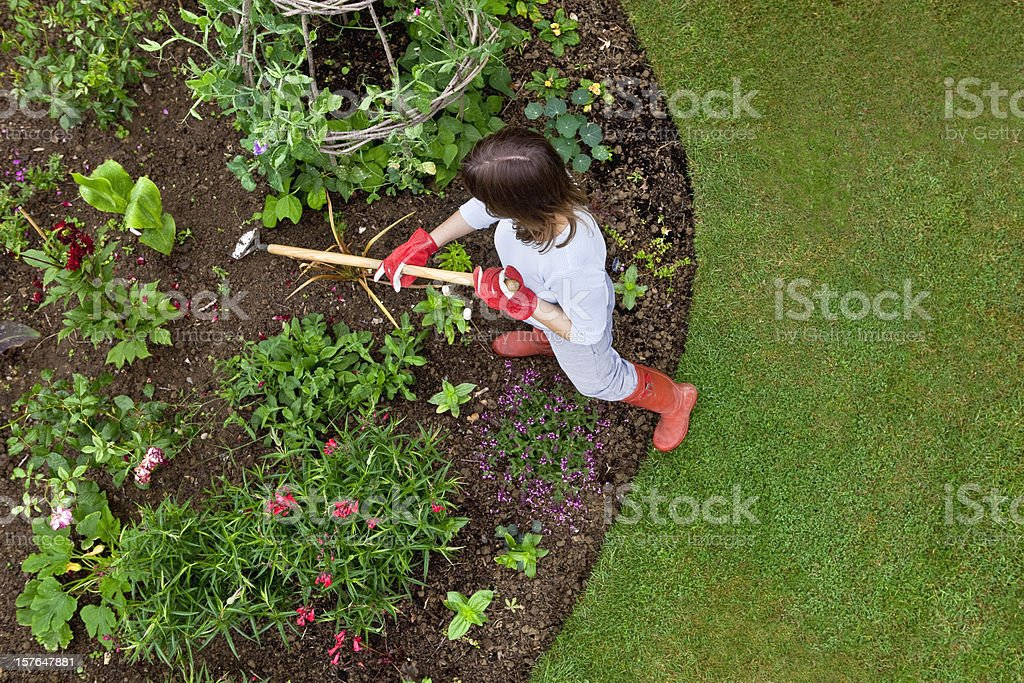 Woman weeding a flower bed with a hoe stock photo