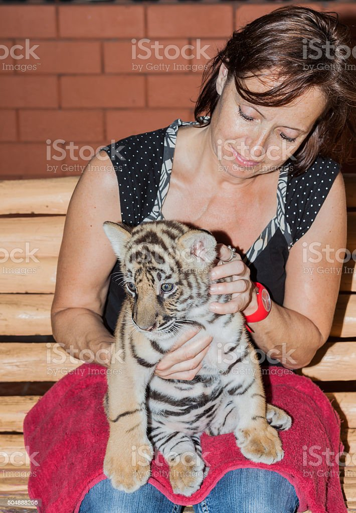 Woman with a tiger cub on her lap stock photo