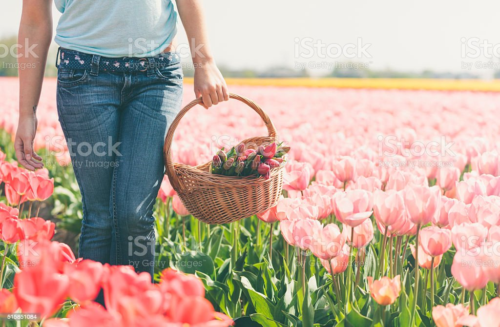 Woman with basket of flowers on a tulips field (Netherlands) stock photo