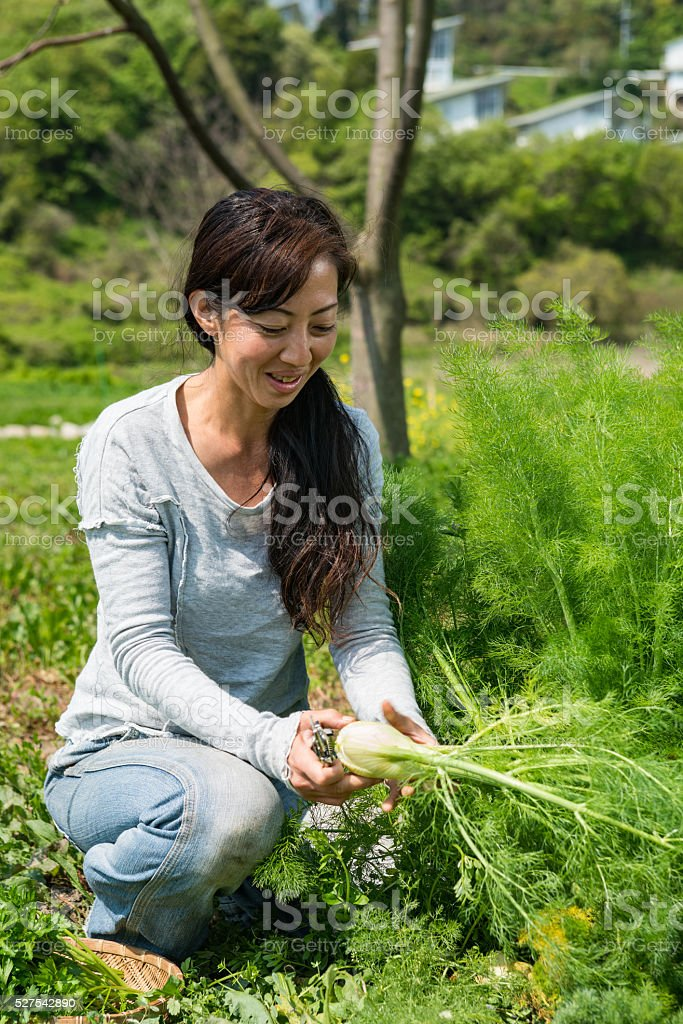 Woman with basket of fresh picked herbs and vegetables stock photo