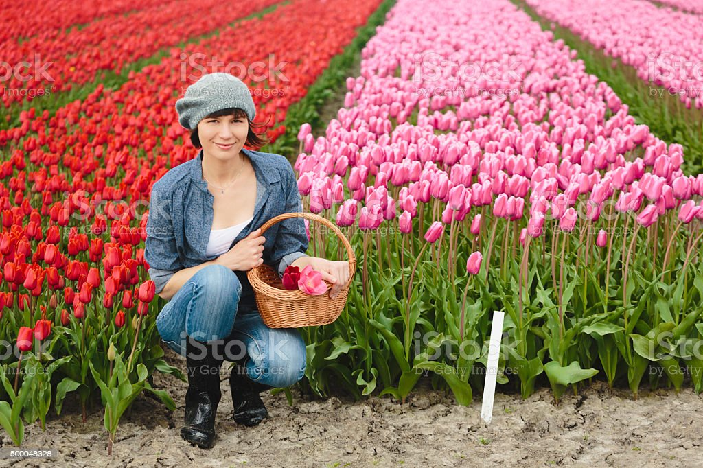 Woman with basket on a tulip field in Netherlands. stock photo