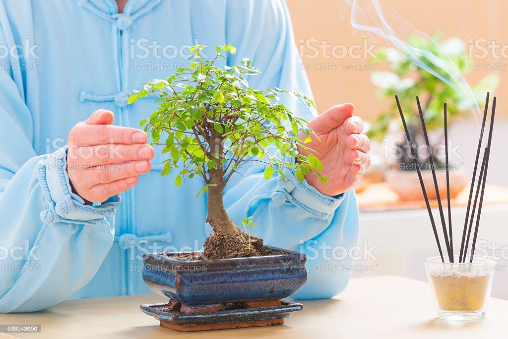 Woman with bonsai tree stock photo