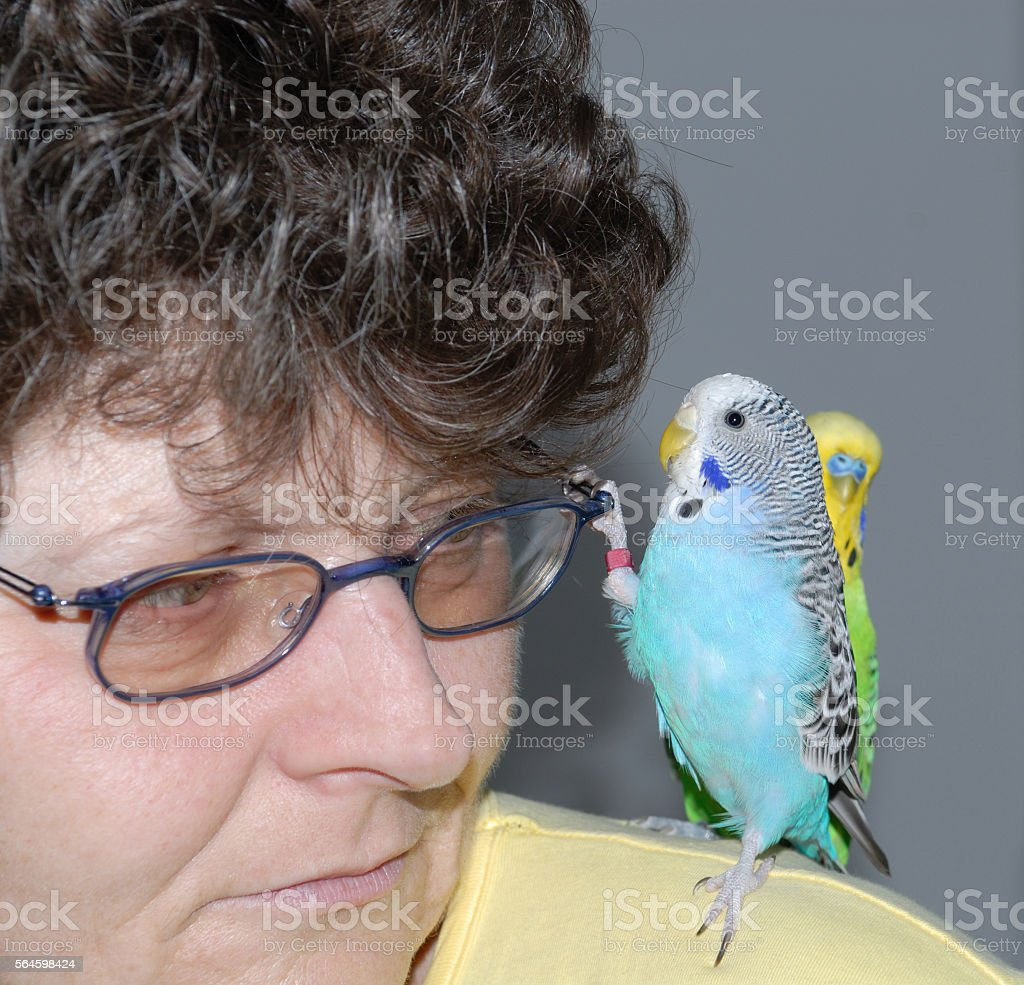 woman with budgerigar stock photo
