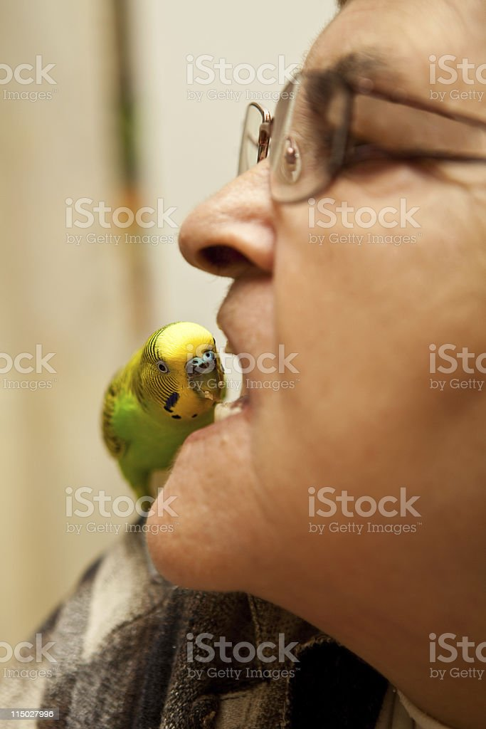 Woman with Budgie stock photo