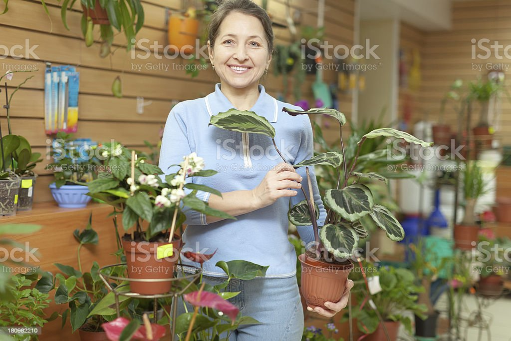 woman with  Calathea plant  in flower store stock photo