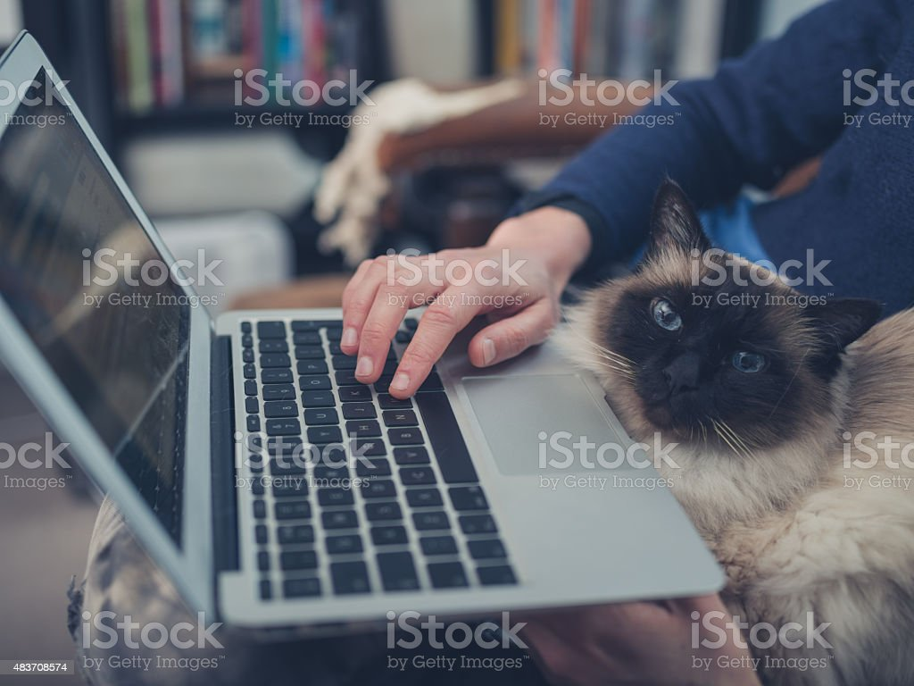 Woman with cat and laptop stock photo