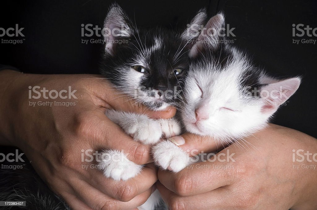 Woman with cats royalty-free stock photo