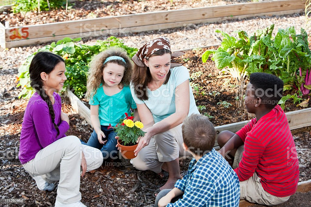 Woman with children in community garden stock photo