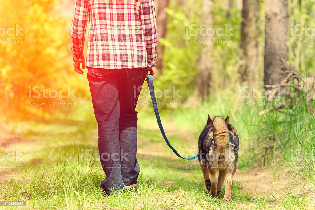 Woman with dog on the leash walking in the forest stock photo