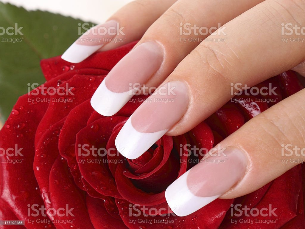 Woman with French manicure resting hand on rose stock photo