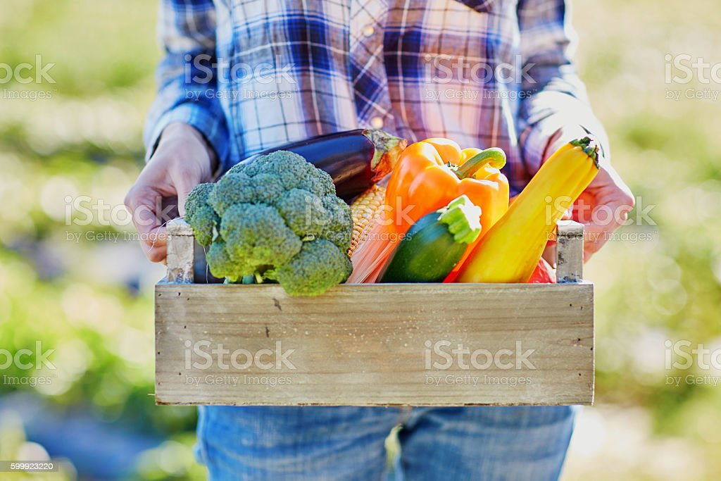 Woman with fresh organic vegetables from farm stock photo