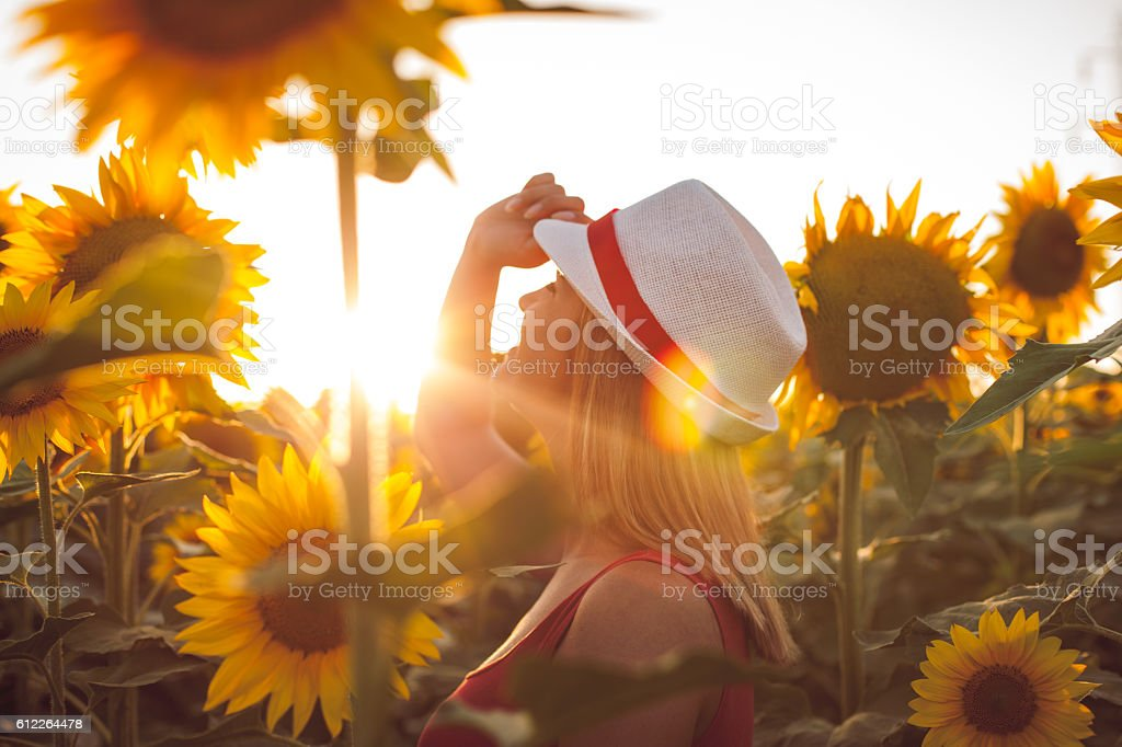 Woman With Hat in a Sunflower Field stock photo