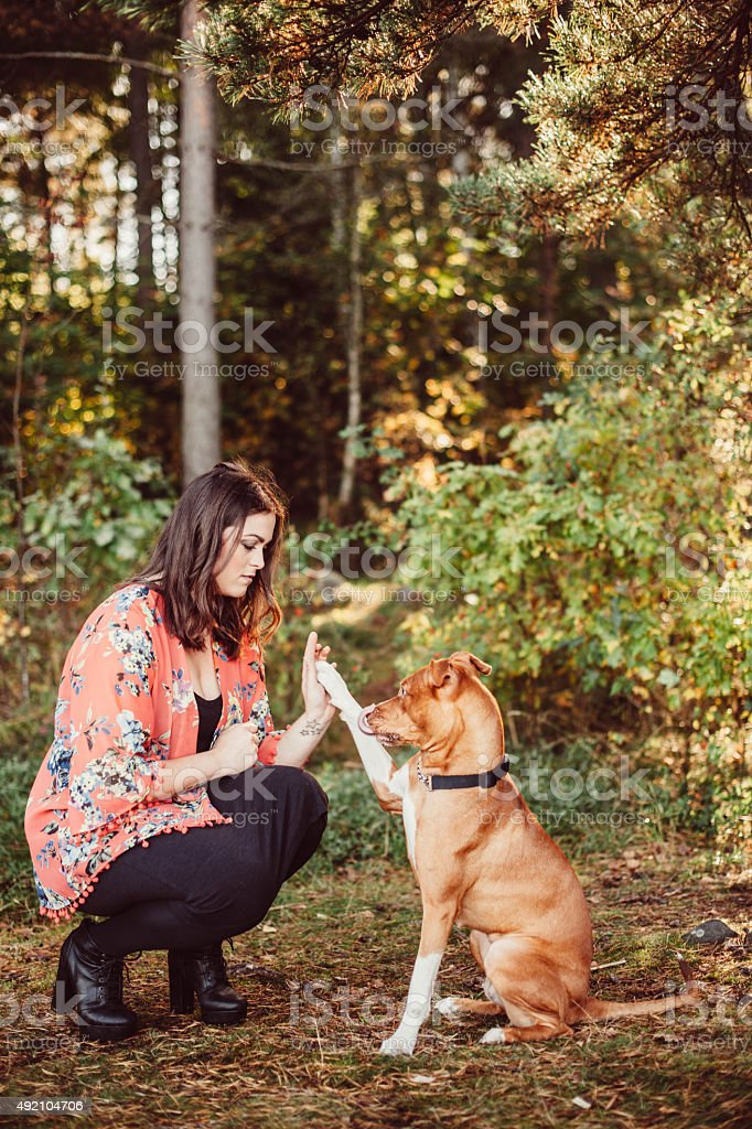 Woman with her dog American Staffordshire Terrier stock photo