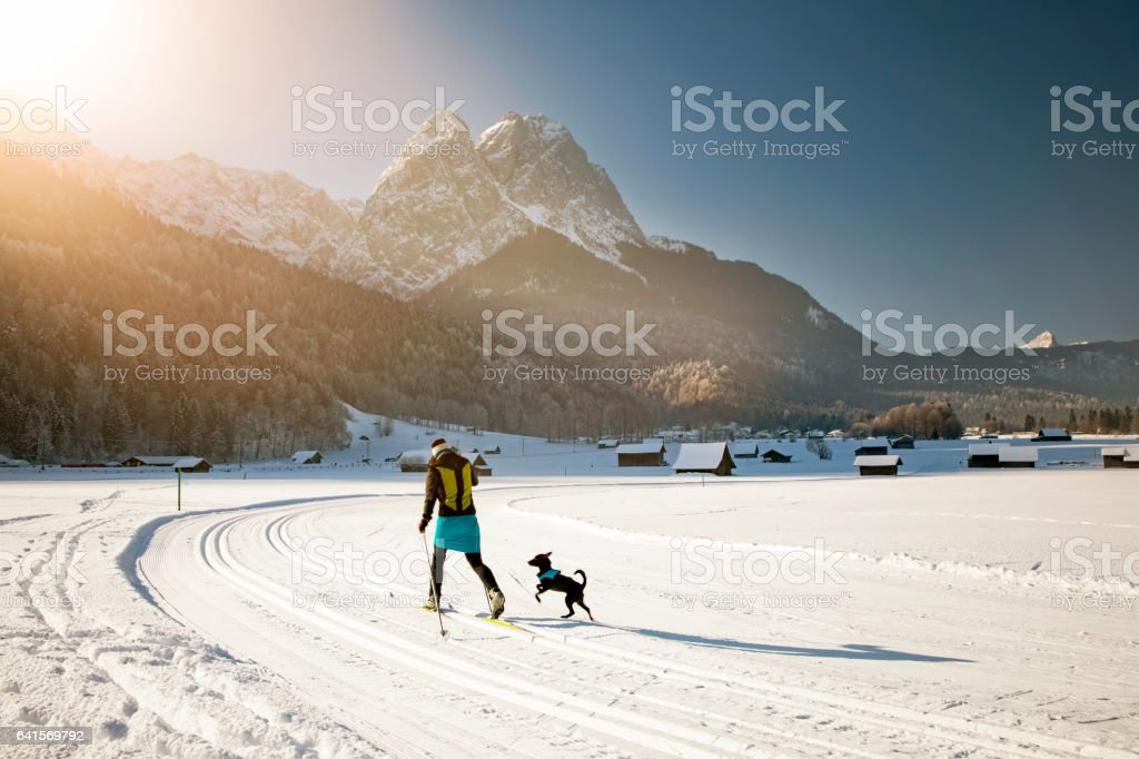 Woman with her dog at cross country skiing in alps stock photo