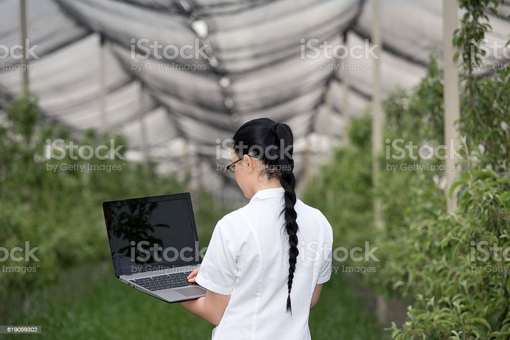 Woman with laptop in apple orchard stock photo