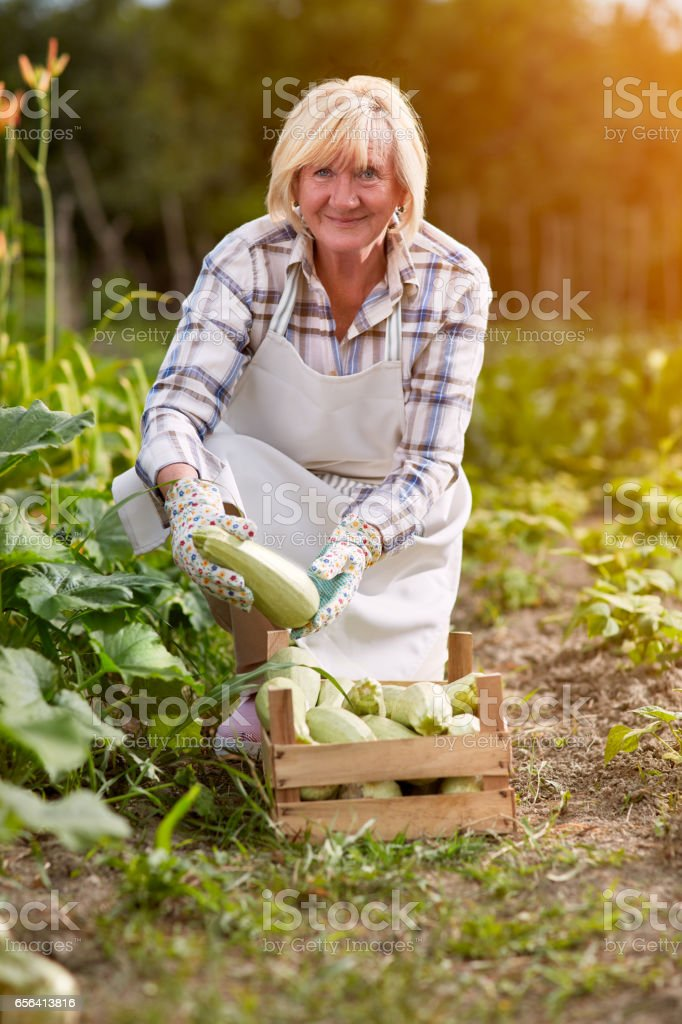 Woman with organic produced zucchini stock photo