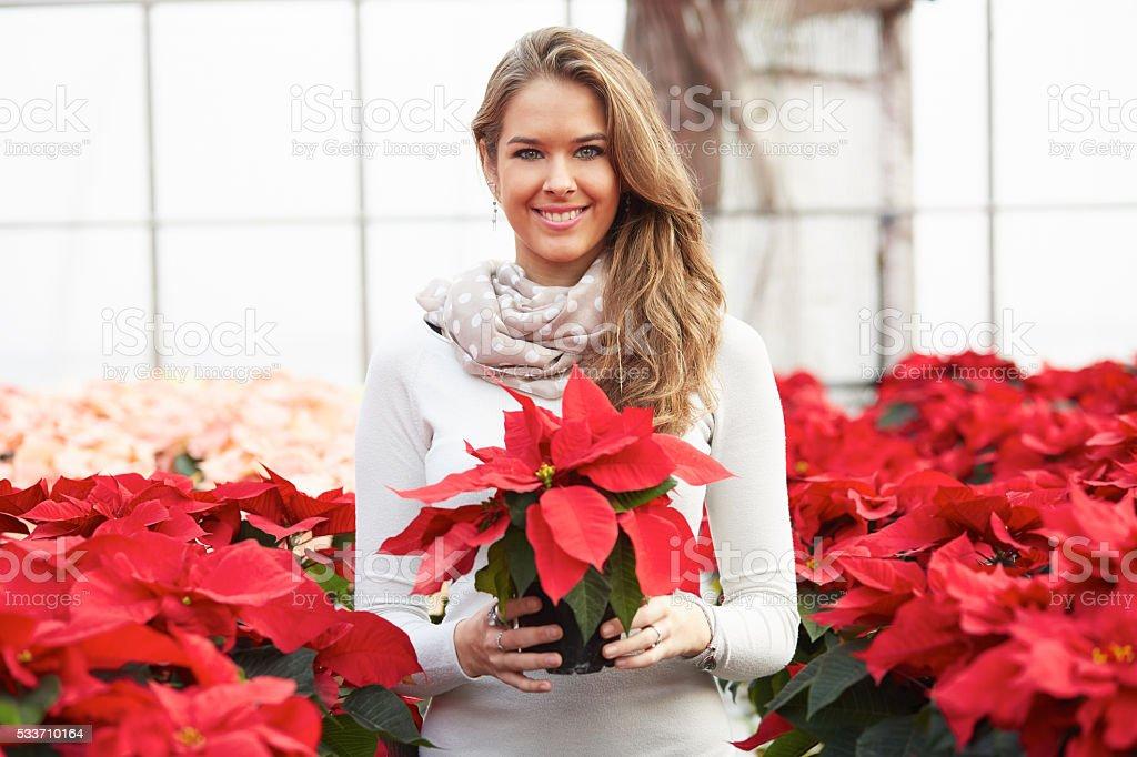 woman with poinsettia stock photo