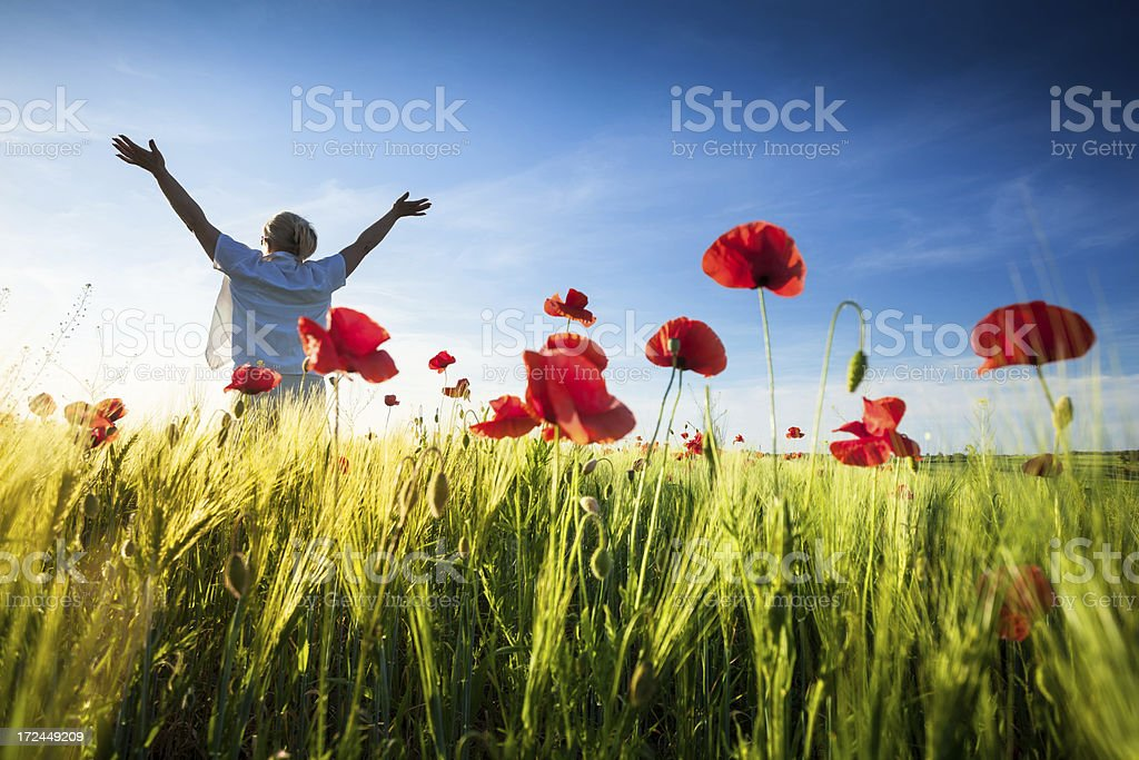 Woman with raised Arms among Red Poppies- Spring Wheat Field stock photo