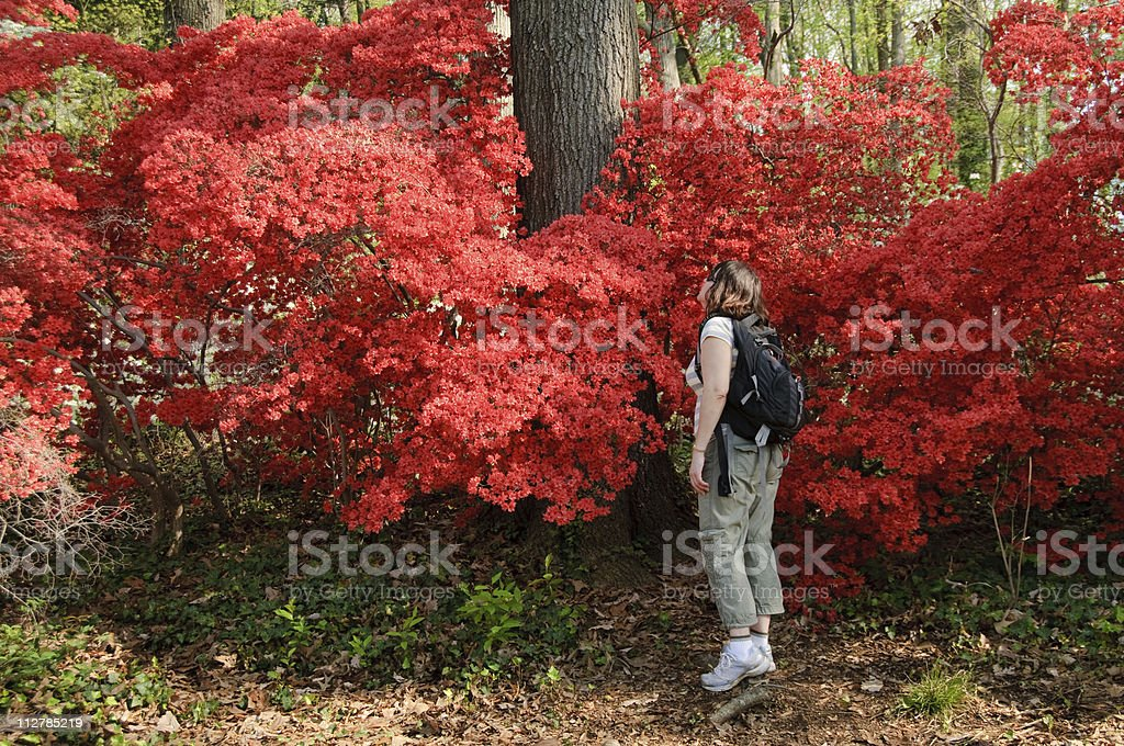 Woman with red azalea bush royalty-free stock photo